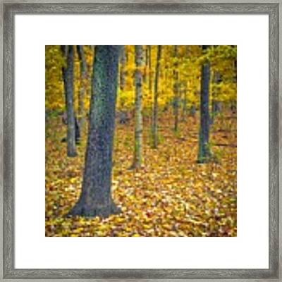 Autumn Framed Print by Samuel M Purvis III