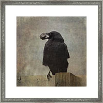 Beware Of Crows Framed Print by Sally Banfill