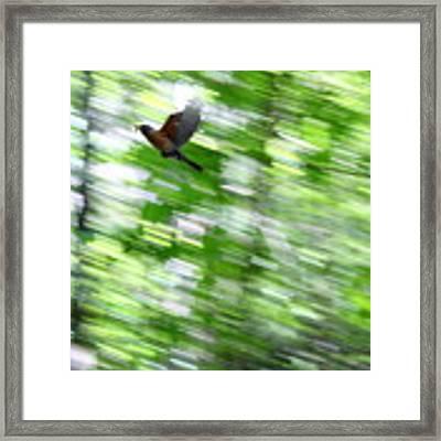 Bird Framed Print by Farzali Babekhan