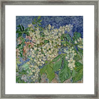 Blossoming Chestnut Branches Framed Print by Vincent Van Gogh