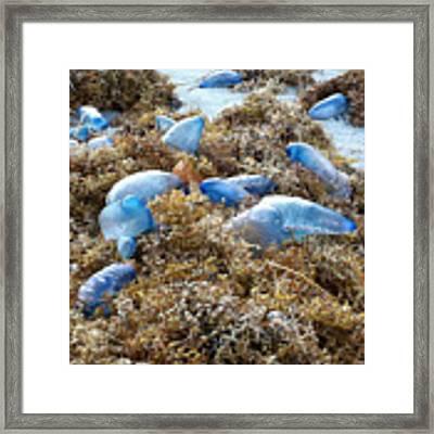 Seeing Blue At The Beach Framed Print by Karen Zuk Rosenblatt