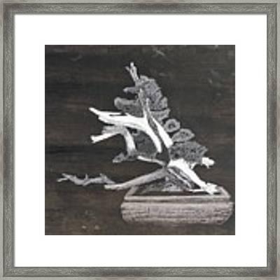 Bonsai #4 Framed Print by Richard Le Page