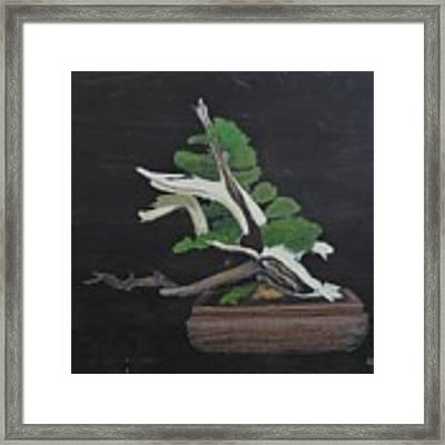 Bonsai #4a Framed Print by Richard Le Page