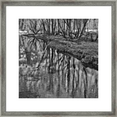 Branches Reflected In Yosemite Framed Print by Priya Ghose