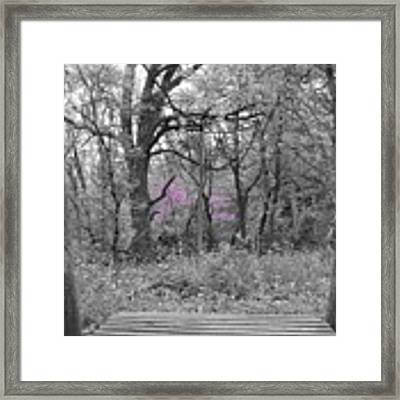 Bridge To Beauty Framed Print by Dylan Punke