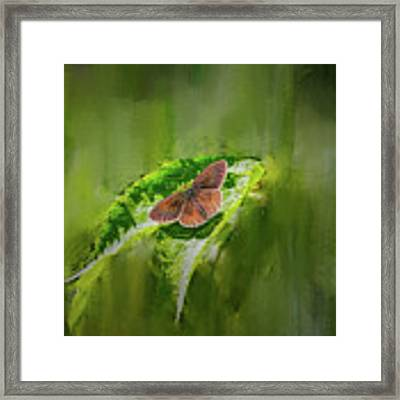 Brown Butterfly #h6 Framed Print by Leif Sohlman
