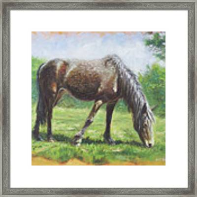 Brown Standing Horse Eating Framed Print by Martin Davey