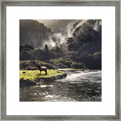Bull Elk In Wilderness Framed Print by Leland D Howard