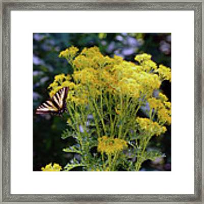 Butterfly At Wilson Creek #2 Framed Print by Ben Upham III