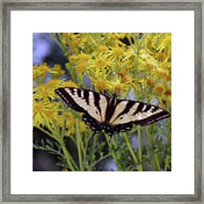 Butterfly At Wilson Creek #3 Framed Print by Ben Upham III