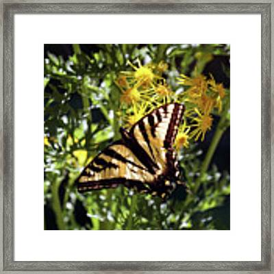 Butterfly At Wilson Creek #4 Framed Print by Ben Upham III