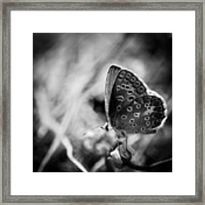 Butterfly In Black And White Framed Print by Mirko Chessari