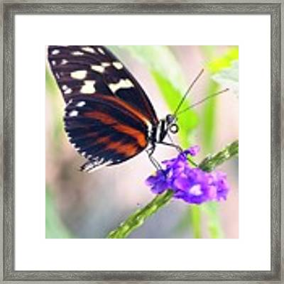 Butterfly Side Profile Framed Print by Garvin Hunter