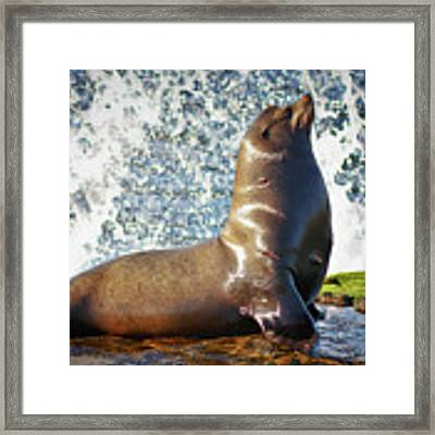 California Sea Lion At La Jolla Cove Framed Print by Sam Antonio Photography