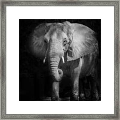 Charging Elephant Framed Print by Ken Barrett