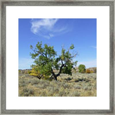 Cloud And Cottonwood Framed Print by Cris Fulton