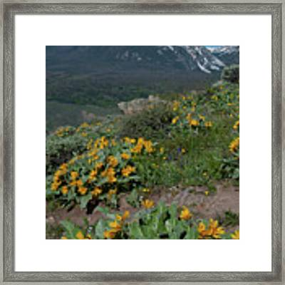 Colorado Spring Wildflower And Mountain Portrait Framed Print by Cascade Colors