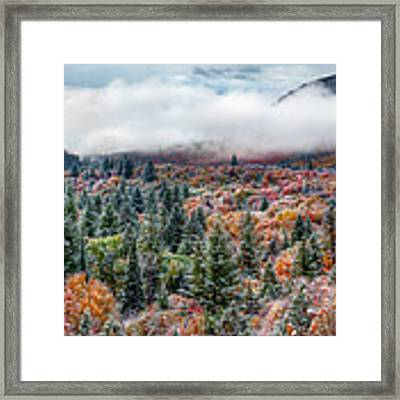 Colorful Forest Framed Print by Leland D Howard