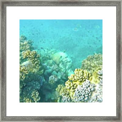 Coral Framed Print by Debbie Cundy