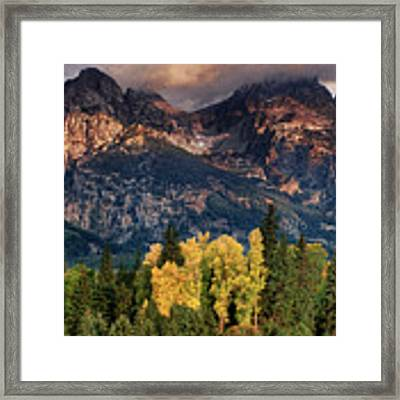 Cottonwoods Fir Trees Fall Color Grand Tetons Nat Framed Print by Dave Welling