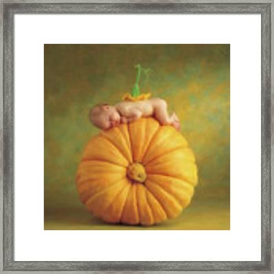 Country Pumpkin Framed Print
