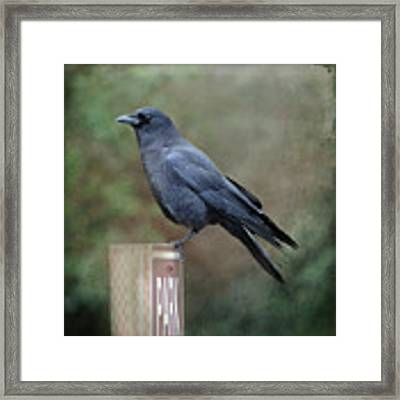 Crow Parking Framed Print by Sally Banfill