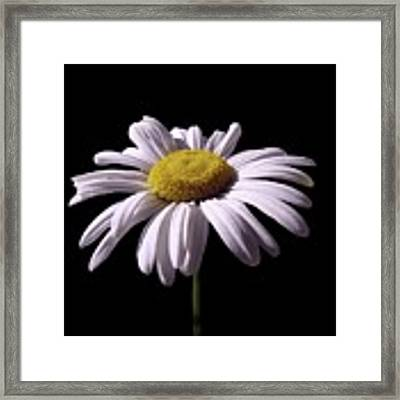 Daisy Framed Print by David Dehner