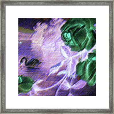Dark Swan And Roses Framed Print by Writermore Arts