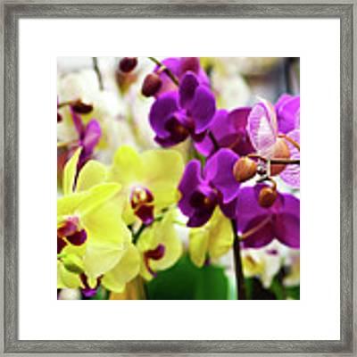 Decorative Orchids Still Life C82418 Framed Print by Mas Art Studio