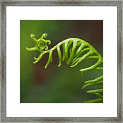 Delicate Fern Frond Spiral Framed Print by Rona Black
