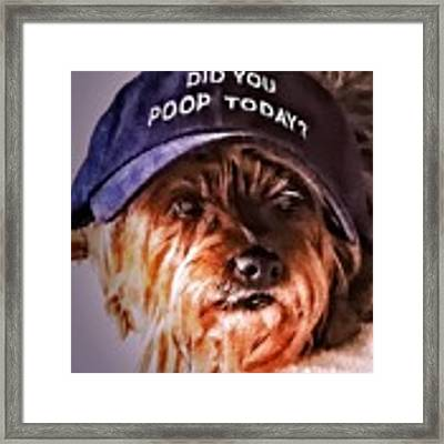 Did You Poop Today Framed Print by Kathy Tarochione