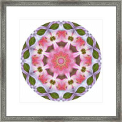 Dogwood Energy Mandala Framed Print by Beth Sawickie