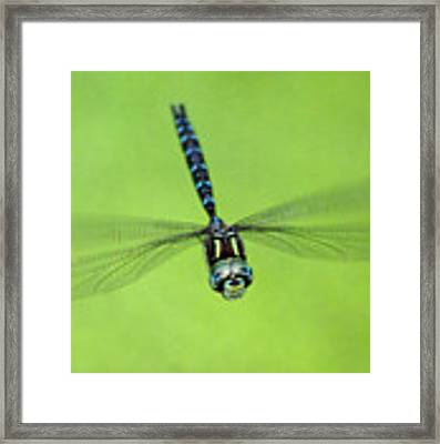 Dragonfly #1 Framed Print by Ben Upham III