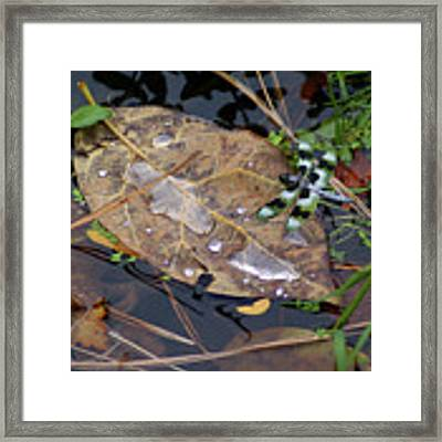 Dragonfly On Leaf In Creek Framed Print by Ben Upham III