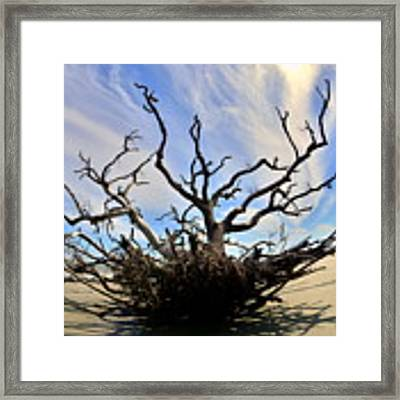 Driftwood And Roots Hunting Island Sc Framed Print by Lisa Wooten