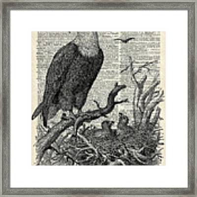 Eagle And Its Nest  Framed Print