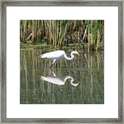 Egret Framed Print by David Armstrong