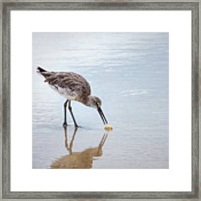 Enjoying A Meal Framed Print by Todd Blanchard
