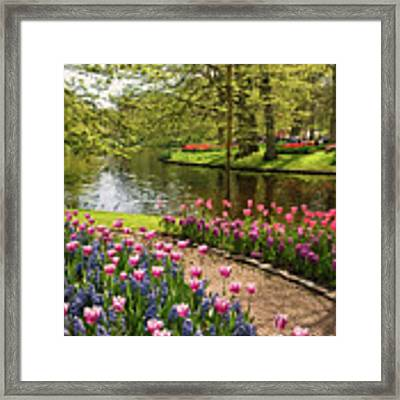 Exuberance  Framed Print by Rosario Piazza