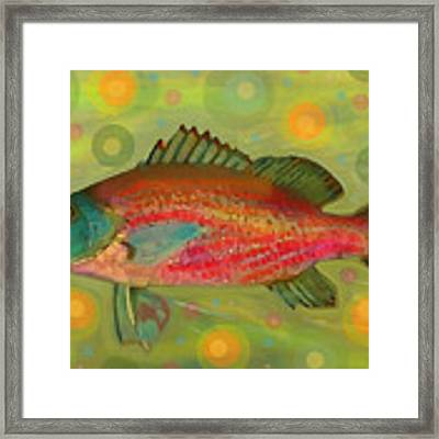 Fanciful Pink Snapper  Framed Print by Shelli Fitzpatrick