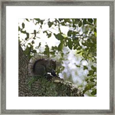 Feeding Time Framed Print by Ralph Jones