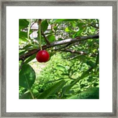 First Of The Season Framed Print by Deleas Kilgore