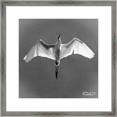 Flight Framed Print by William Havle