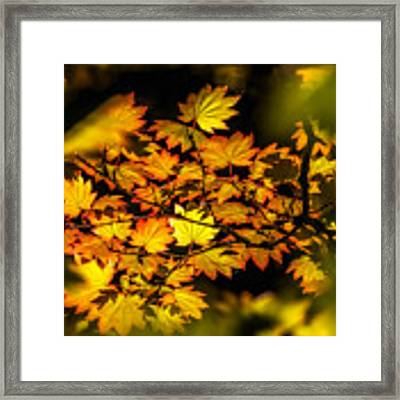 Floating Leaves Framed Print by Claudia Abbott