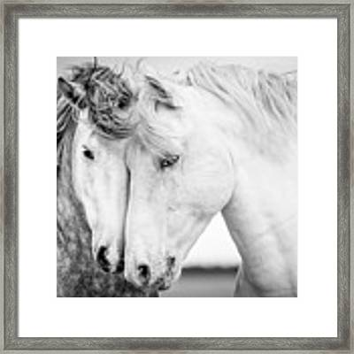 Friends V Framed Print by Tim Booth
