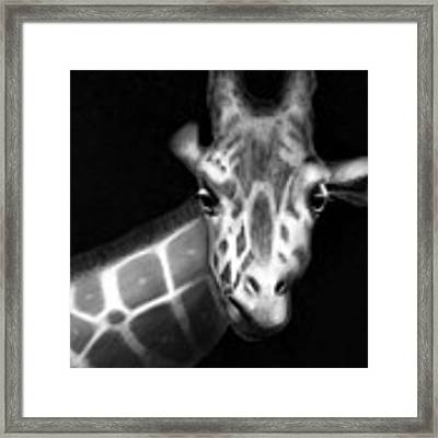 Giraffe In Black And White Framed Print by Angela Murdock