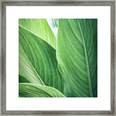 Green Leaves No. 2 Framed Print by Todd Blanchard