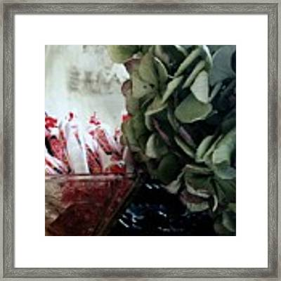 Halloween Is Around The Corner Framed Print by Delight Worthyn