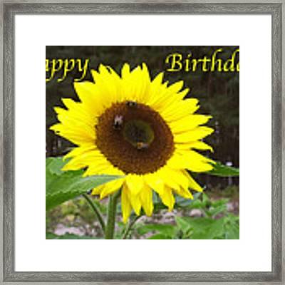 Happy Birthday - Greeting Card - Sunflower Framed Print by Sascha Meyer