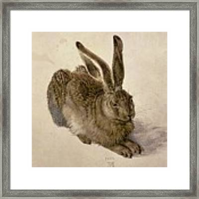 Hare Framed Print